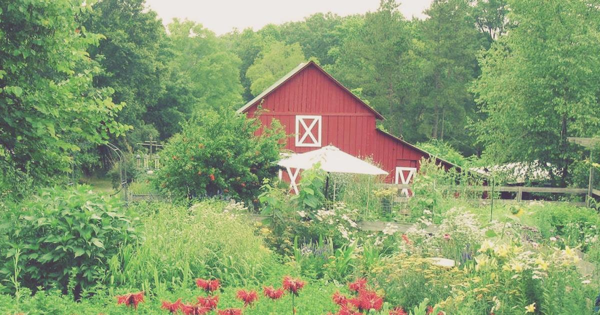 Sarah Williams Nutrition Healthy Lifestyle Eating on a farm